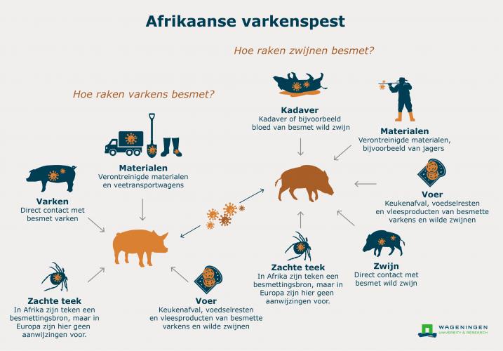 Verspreiding Afrikaanse varkenspest.