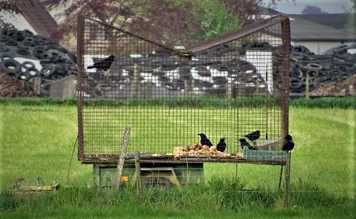 Het vangen en opsluiten van wilde vogels zorgt voor stress, angst en ongerief.