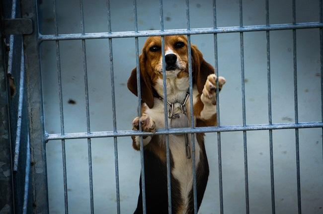 Honden worden nog steeds gebruikt in onnodige testen