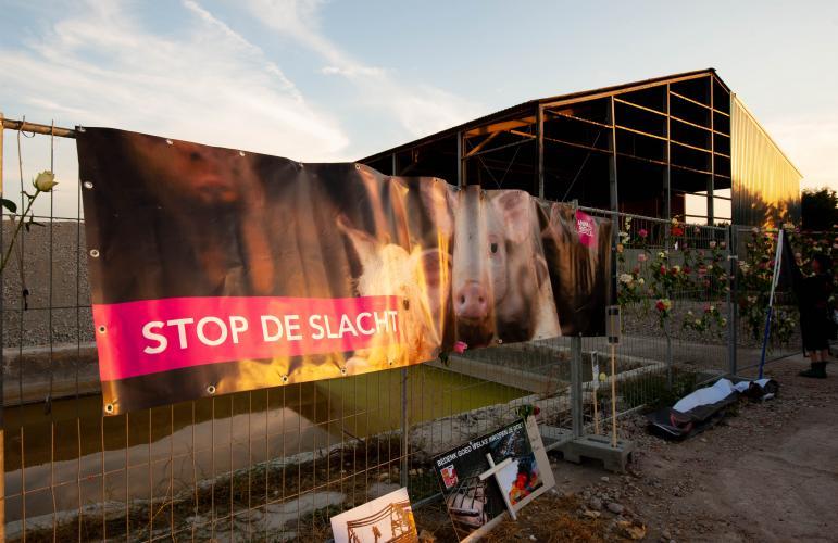 Animal Rights, Erichem, Straathof, Knorhof