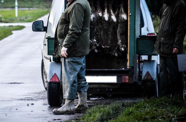 Foto Animal Rights: aanhanger vol met dode hazen.