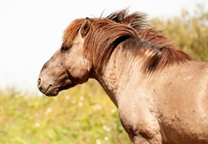 Animal Rights, OVP, Oostvaardersplassen, grote grazers