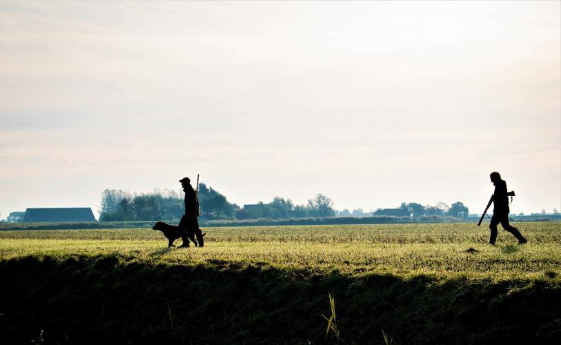Jagers in Zuid-Holland hebben bijna 75.000 eenden gedood.
