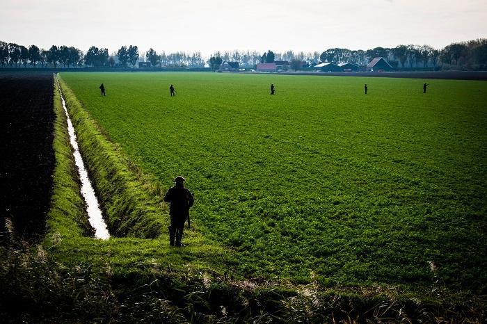 De jagers lopen in een linie door het weiland om de hazen op te drijven.