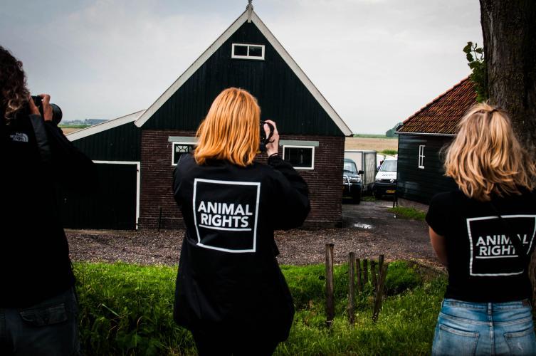 Activisten van Animal Rights leggen de vergassingen vast (2018).