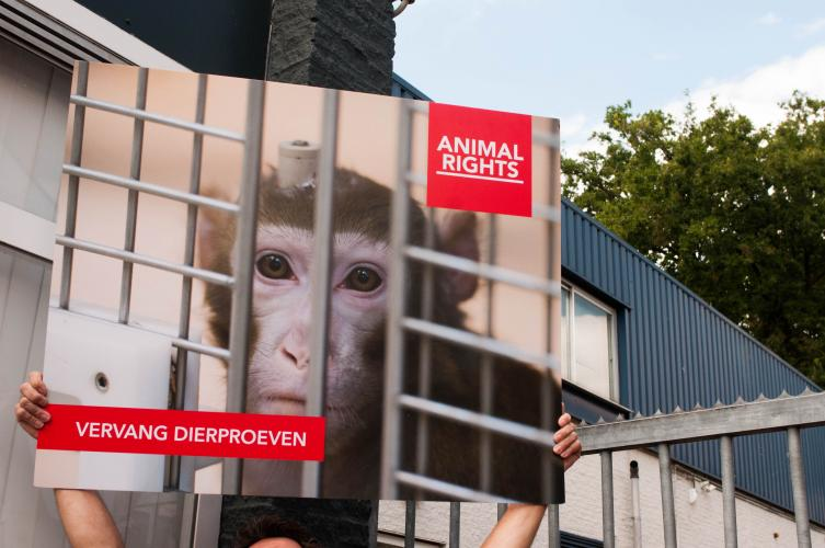Animal Rights wil een einde aan de handel in laboratoriumapen.