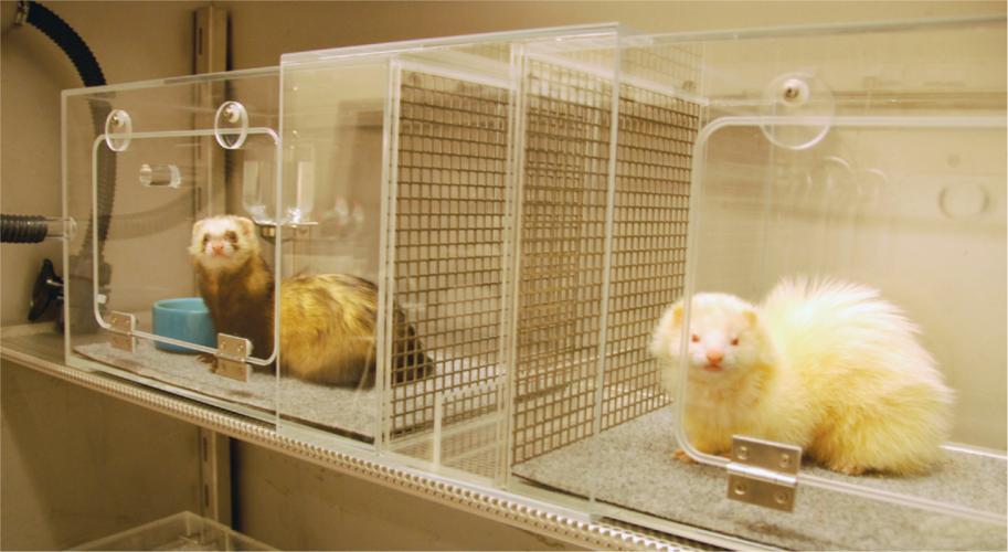 Fretten in een dierproef