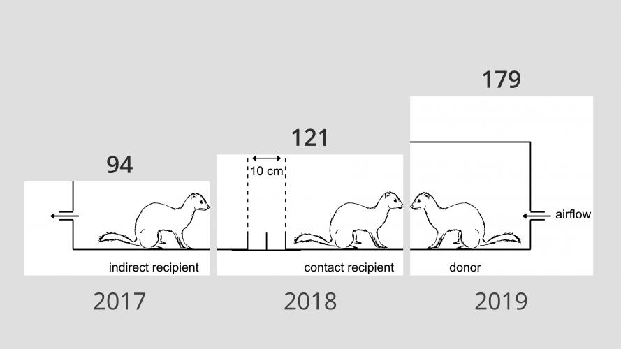 Aantal experimenten op fretten in het Erasmus MC per jaar. Bron: proefdierenjaarverslag NVWA