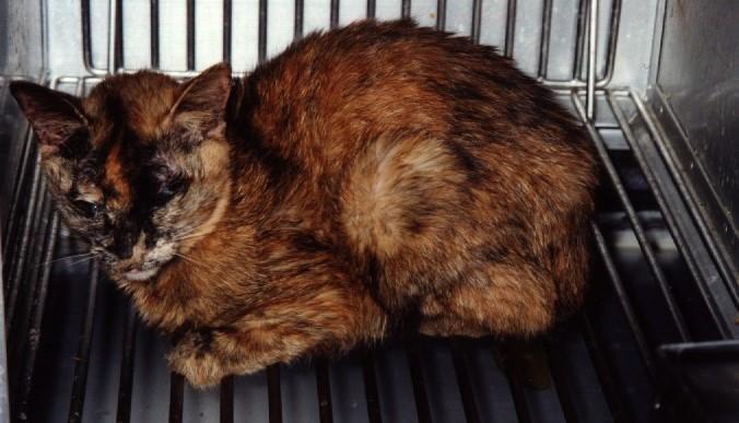 Kat in proefdiercentrum