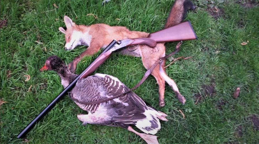 Een doodgeschoten vos en gans.
