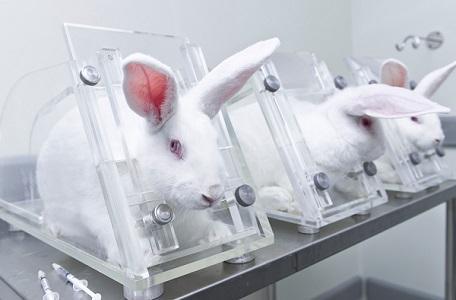 Konijnen zitten tijdens de dierproef vast in een plastiek buis