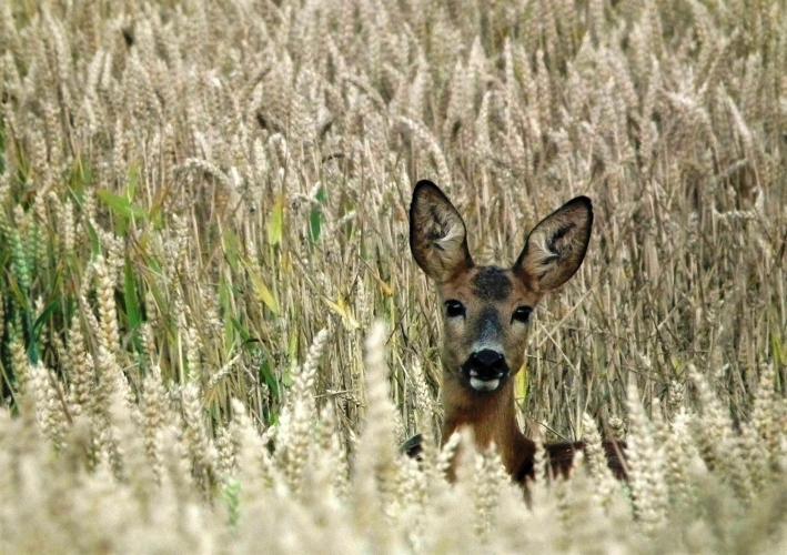 Bij open bermen is de kans groter dat zowel mens als dier elkaar eerder zien.
