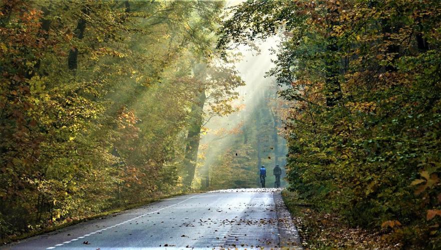 Op deze weg hebben zowel mensen als dieren weinig zicht.