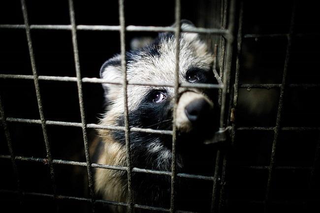 Onvoorstelbaar lijden in de bontindustrie