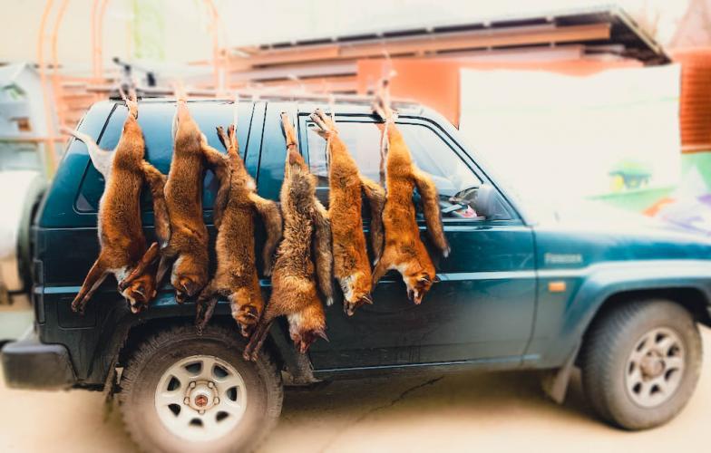 Stop de heksenjacht op de vos!