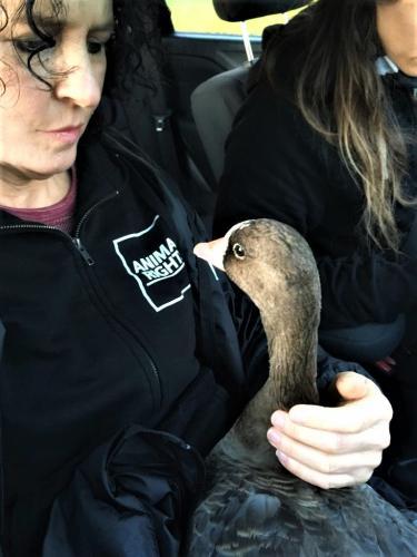 Kollie werd met spoed naar de dierenarts gebracht.