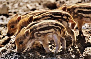 De overmaat aan stikstof is voor de voedselarme natuur op de Veluwe de belangrijkste bedreiging.